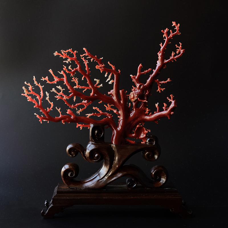 红珊瑚鉴别:如何鉴别阿卡与沙丁红珊瑚?阿卡与沙丁红珊瑚鉴别技巧