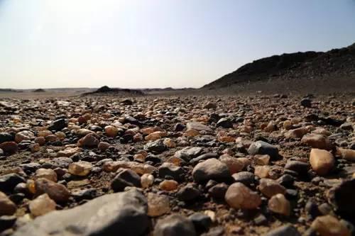 在新疆,有一种致富叫做捡石头!