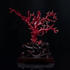 阿卡深紅珊瑚原枝擺件