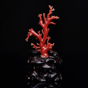 阿卡珊瑚原枝摆件