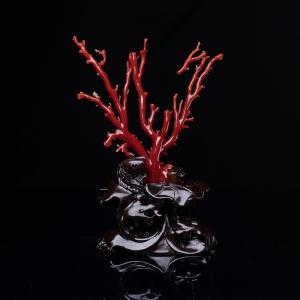 阿卡牛血红珊瑚原枝摆件