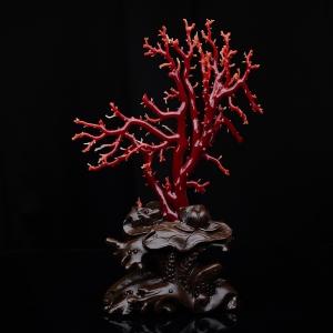 阿卡牛血红珊瑚树枝摆件