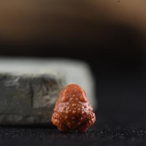 柿子红南红金蟾戒面