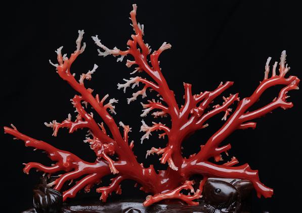 什么是阿卡红珊瑚,怎样鉴定阿卡红珊瑚
