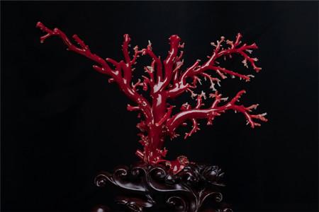 紅珊瑚鑒別實用方法,紅珊瑚這樣鑒別準沒錯!