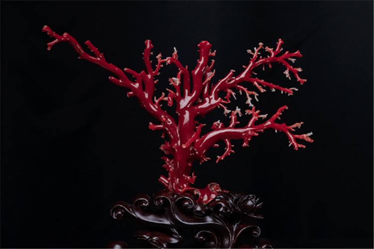 红珊瑚价格多少钱一克