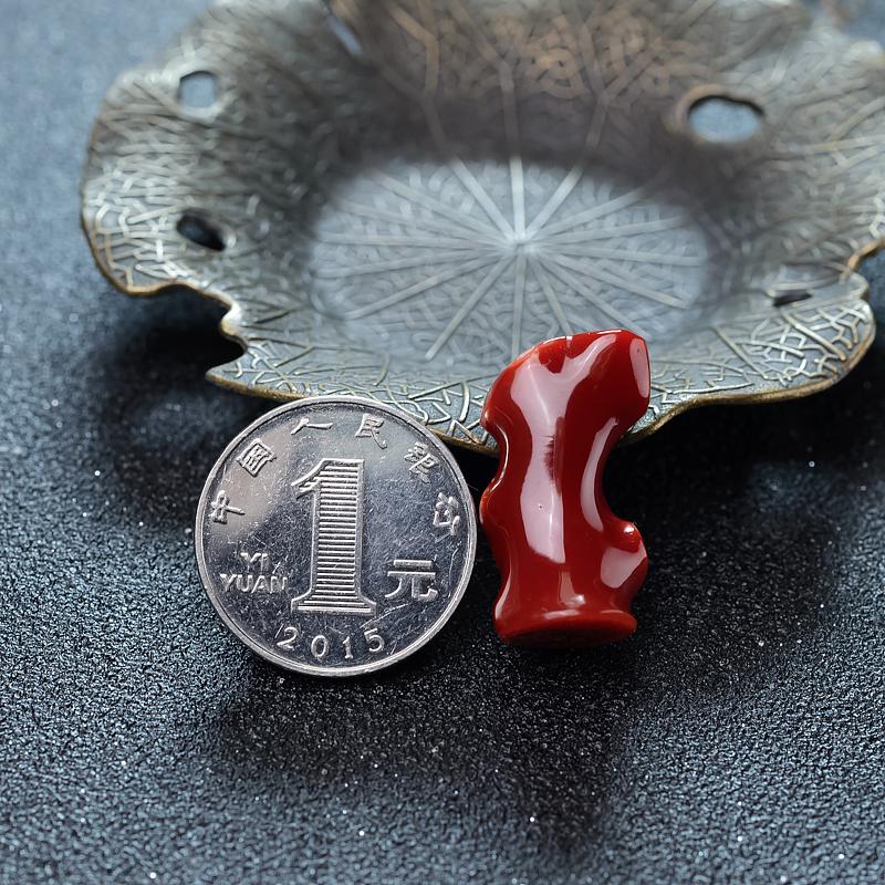 阿卡珊瑚原枝-红掌柜