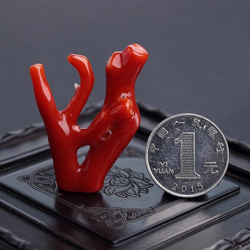 天然阿卡紅珊瑚原枝 - 紅掌柜